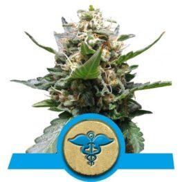 Royal Medic Cannabis Seeds