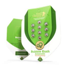 Buy Bubble Kush Automatic Cannabis Seeds from Royal Queen Seeds