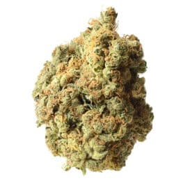 Buy AK020 cannabis seeds from Amsterdam Genetics online at HollandsHigh!