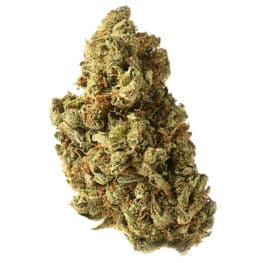Buy Amazing Haze cannabis seeds from Amsterdam Genetics online at HollandsHigh!