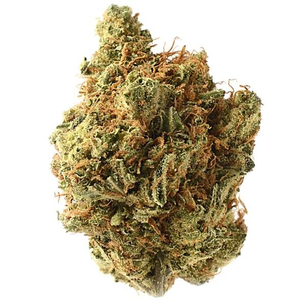 Buy Amnesia Haze cannabis seeds from Amsterdam Genetics online at HollandsHigh!