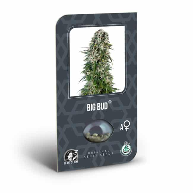 Big Bud Auto Cannabis Seeds