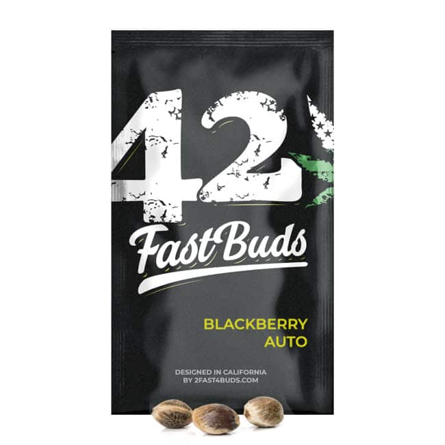 Blackberry Automatic Cannabis Seeds
