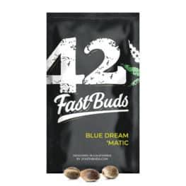 Blue Dream 'Matic Cannabis Seeds
