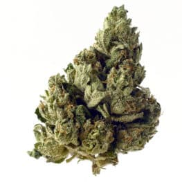 Buy Choco Kush Autoflower cannabis seeds from Amsterdam Genetics online at HollandsHigh!