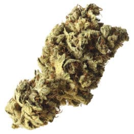 Buy Pineapple Kush cannabis seeds from Amsterdam Genetics online at HollandsHigh!