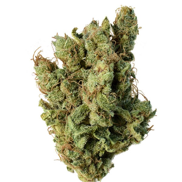 Buy Super Silver Haze cannabis seeds from Amsterdam Genetics online at HollandsHigh!