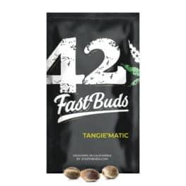 Zkittlez Automatic Cannabis Seeds