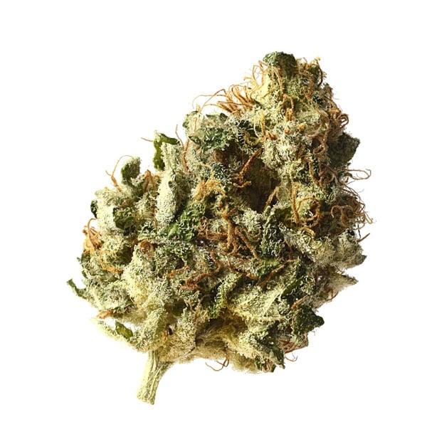 Buy Kosher Choco Kush cannabis seeds from Amsterdam Genetics online at HollandsHigh!
