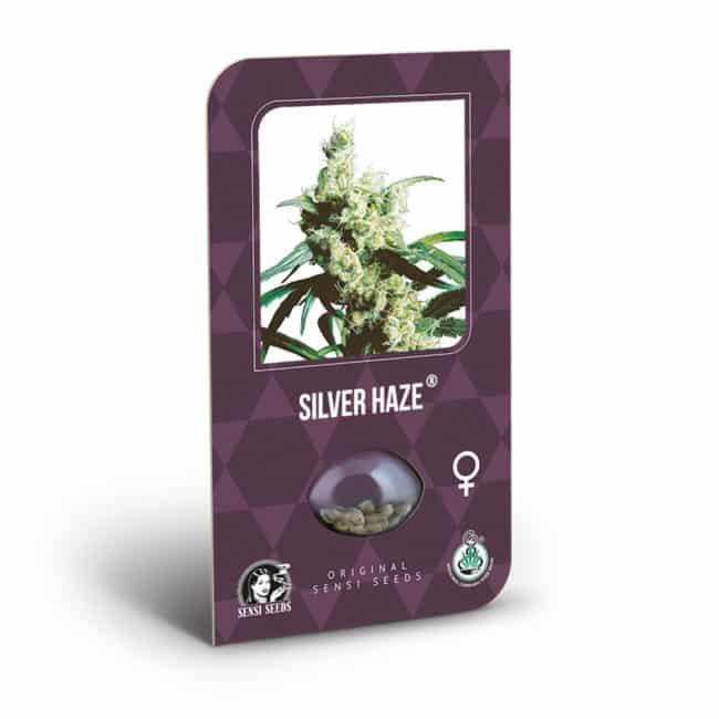 Silver Haze Cannabis Seeds