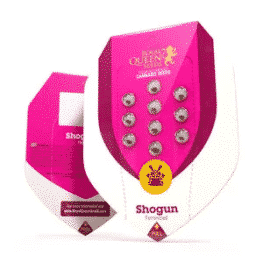 Shogun Cannabis Seeds Royal Queen Seeds