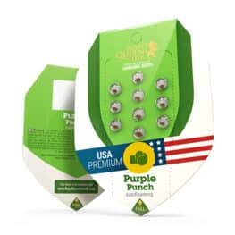 Purple Punch Automatic Cannabis Seeds