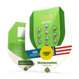 Watermelon Automatic Cannabis Seeds