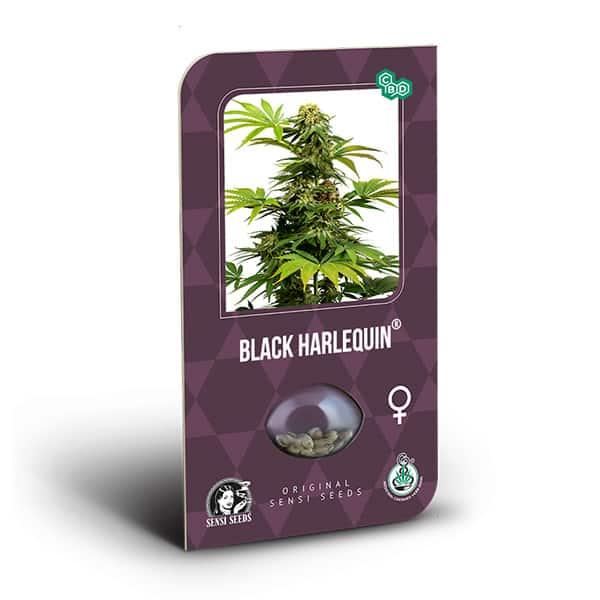 Black Harlequin CBD